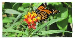 Monarch At Rest Beach Towel