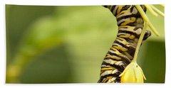 Monarch Caterpillar Beach Sheet