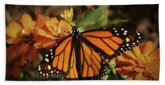 Monarch Spotlight. Beach Sheet