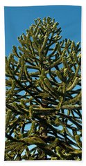 Monkey Puzzle Tree E Beach Sheet by Tikvah's Hope