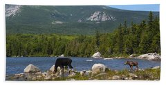 Moose Baxter State Park Maine Beach Towel