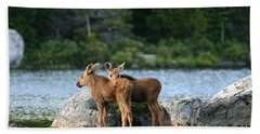 Moose Calves In Maine Beach Towel by Jeannette Hunt