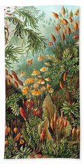 Muscinae Digital Art Beach Towels