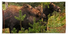 Beach Towel featuring the photograph Moose Family At The Shredded Pine by Stanza Widen