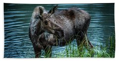 Moose In The Water Beach Sheet by Andrew Matwijec