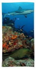 Moray Reef Beach Towel
