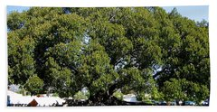 Moreton Fig Tree In Santa Barbara Beach Sheet