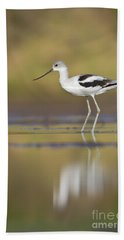 Beach Sheet featuring the photograph Morning Avocet by Bryan Keil