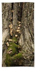 Beach Towel featuring the photograph Moss-shrooms On A Tree by Carol Lynn Coronios