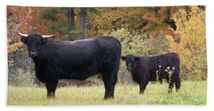 Beach Towel featuring the photograph Highland Cattle  by Eunice Miller