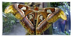 Atlas Moth Beach Sheet by Bob Slitzan
