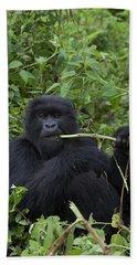 Mountain Gorilla Eating Wild Celery Beach Towel