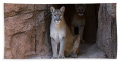 Beach Sheet featuring the photograph Mountain Lion 1 by Arterra Picture Library
