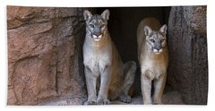 Beach Sheet featuring the photograph Mountain Lion 2 by Arterra Picture Library