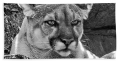 Mountain Lion Bergen County Zoo Beach Sheet