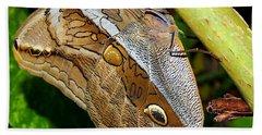 Mournful Owl Butterfly Beach Towel by Amy McDaniel