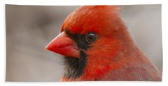 Mr Cardinal Portrait Beach Towel by Mircea Costina Photography