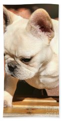 French Bulldog Ms Quiggly  Beach Towel