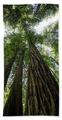 Muir Woods I Beach Towel