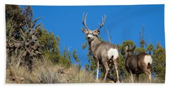 Mule Deer Buck Beach Sheet