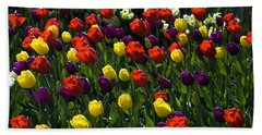 Multicolored Tulips At Tulip Festival. Beach Sheet