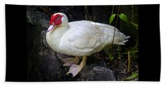 White Muscovy Duck Beach Towel by Venetia Featherstone-Witty