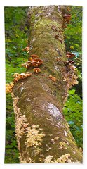 Mushroom's Kingdom Beach Sheet