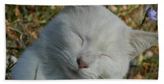 Napping Barn Cat Beach Towel by Kathy Barney