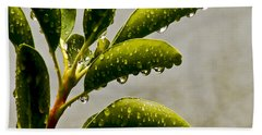 Natures Teardrops Beach Sheet by Carol F Austin