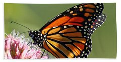 Nectaring Monarch Butterfly Beach Towel
