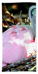 Nesting Spoonbill Beach Sheet by Carol Groenen