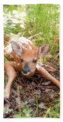New Fawn In The Forest Beach Towel by Angie Rea