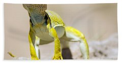 New Photographic Art Print For Sale Yellow Lizard Ghost Ranch New Mexico Beach Towel