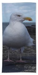 New Quay Gull  Beach Towel by John Williams