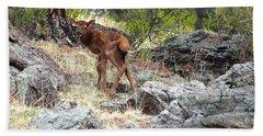 Newborn Elk Calf Beach Sheet