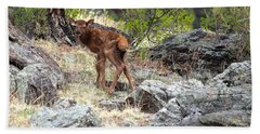 Newborn Elk Calf Beach Sheet