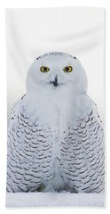 Nh Seacoast Snowy Owl  Beach Towel