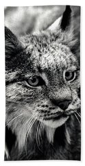North American Lynx In The Wild. Beach Towel