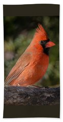 Northern Cardinal 2 Beach Sheet by Kenneth Cole