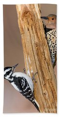 Northern Flicker And Hairy Woodpecker Beach Towel