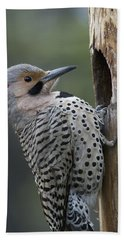 Northern Flicker At Nest Cavity Alaska Beach Towel