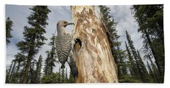 Northern Flicker At Nest Cavity Beach Towel