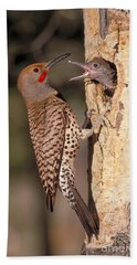 Northern Flicker At Nest Beach Towel