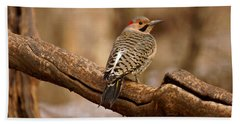 Northern Flicker II Beach Towel
