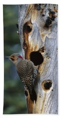 Northern Flicker Near Nest Cavity Alaska Beach Towel