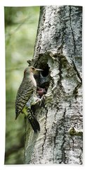 Northern Flicker Nest Beach Towel