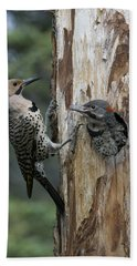 Northern Flicker Parent At Nest Cavity Beach Towel