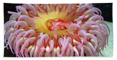 Beach Sheet featuring the photograph Northern Red Anemone by Robert Meanor