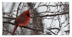 Northern Red Cardinal In Winter Beach Sheet
