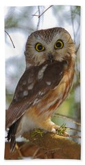 Northern Saw-whet Owl Beach Towel